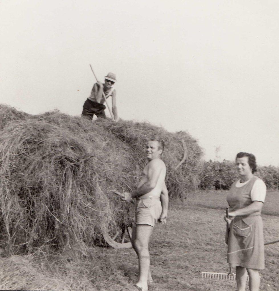 Foto Famiglia Mardegan-Piccolo - Il lavoro nei campi